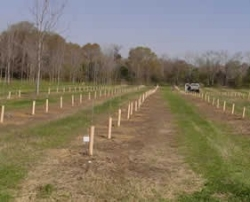 Seedling orchard.