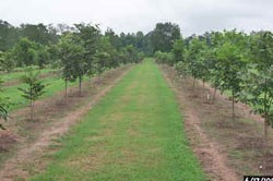 Seedling orchard - summer.