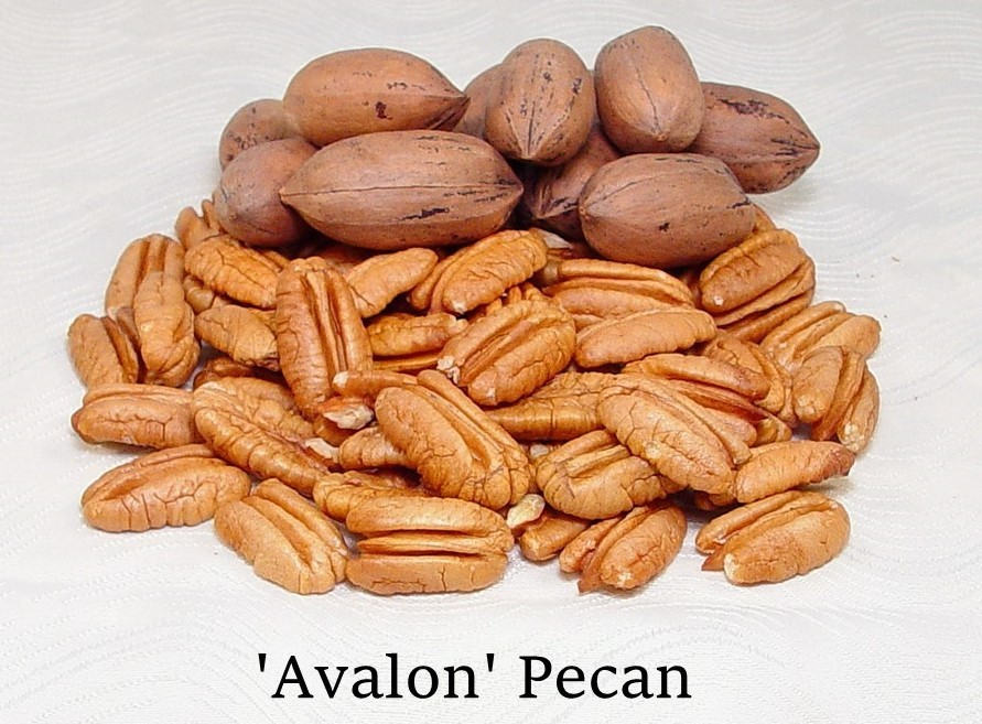 Bowl of Avalon pecans