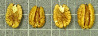 'Jenkins' nuts showing poor fill and fuzz.